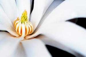 magnoli19