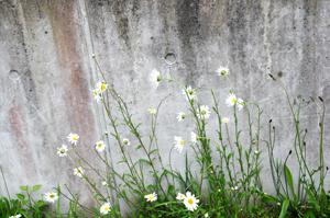 flowercentre1