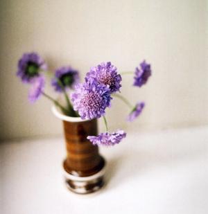 purple3_blog