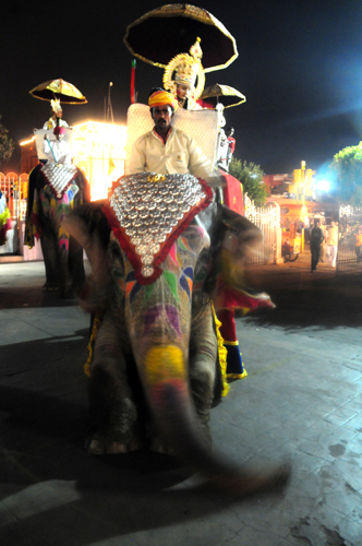 Elephants, Jaipur